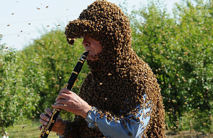 professor plays the clarinet while covered in bees cmuse