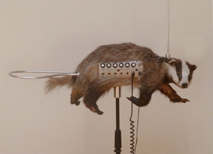 Badgermin unusual music instrument