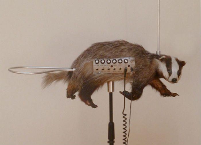 Badgermin unusual music instrument