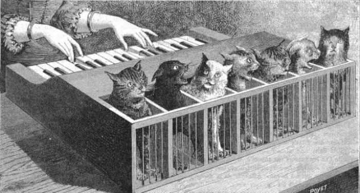 the cat piano unusual music instrument